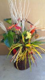 Náhľad - Kôš s črepníkovými kvetmi