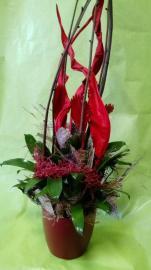 Náhľad - Vriesea- ozdobený črepníkový kvet